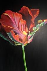 Tulpe: Acryl 65 x 105 cm